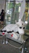 Gekkou_cow